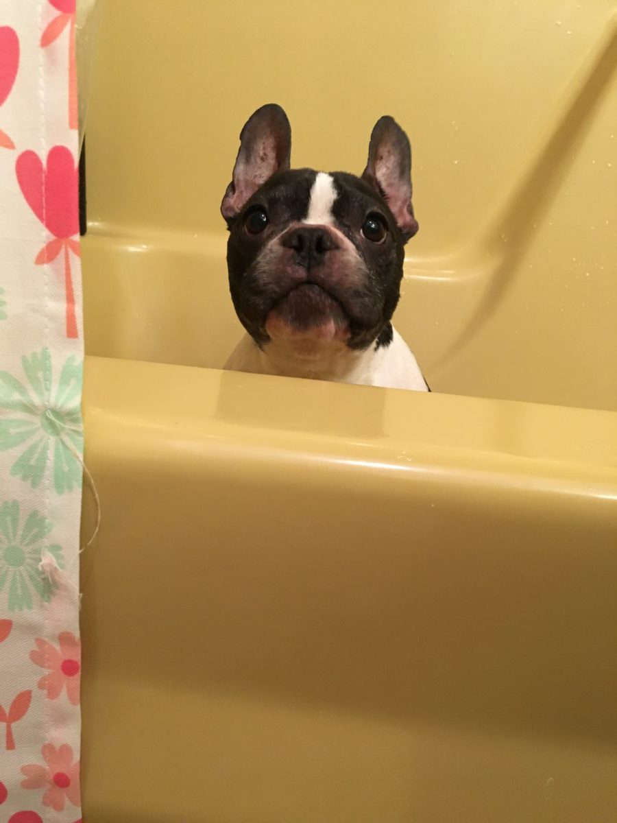 how to bathe your dog what you should be carfeul about 7 common mistakes you make while bathing your dog for most of us, taking a shower or bath is often a calming experience for our pets, however, the bathroom can be anything but relaxing.
